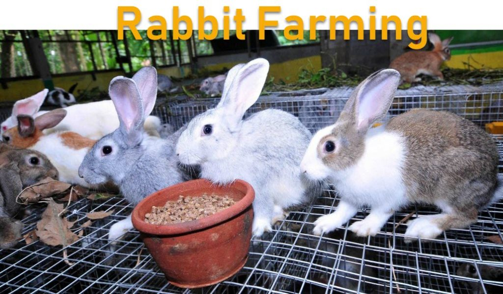 how to start rabbit farming business