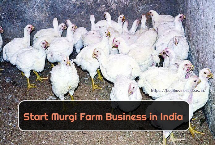 Start Murgi Farm in India,Cost,Profit