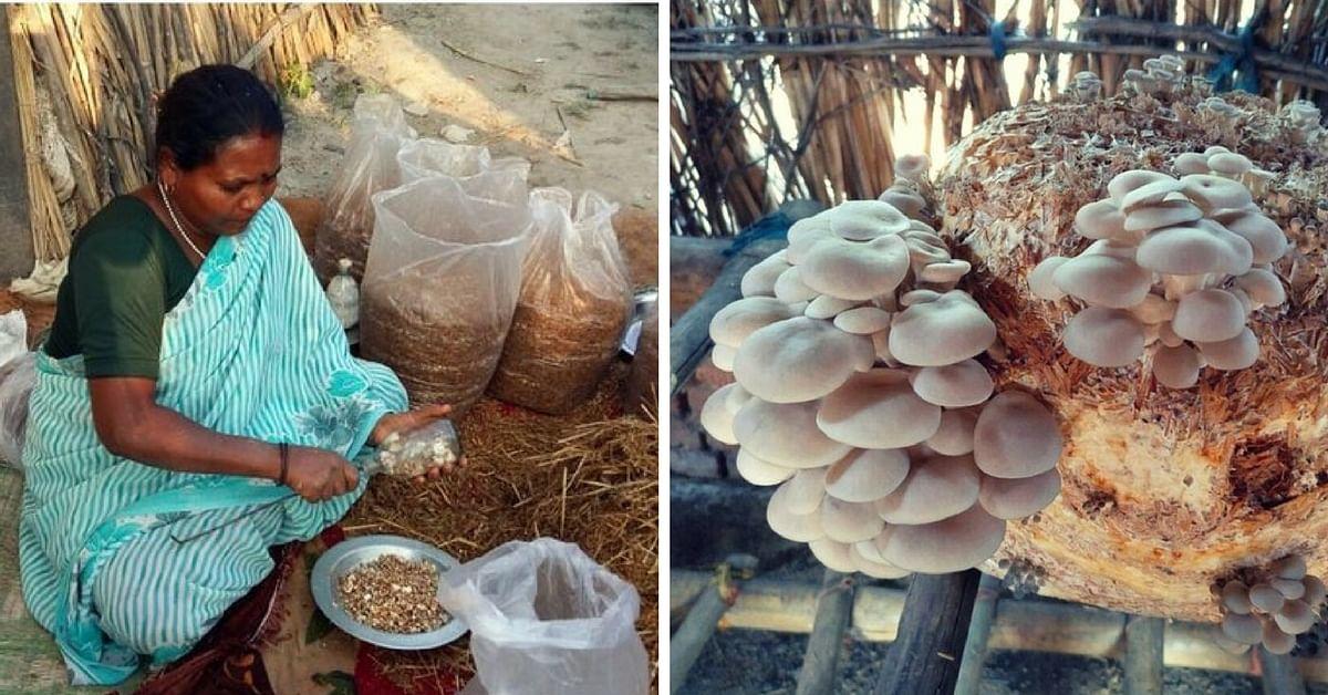 start mushroom cultivation